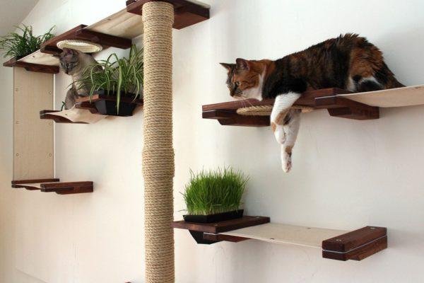 Как выбрать правильный домик для кошки для квартиры