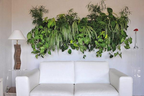 Какие растения можно использовать для интерьера