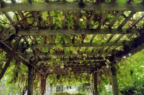 Деревянный навес для виноградника