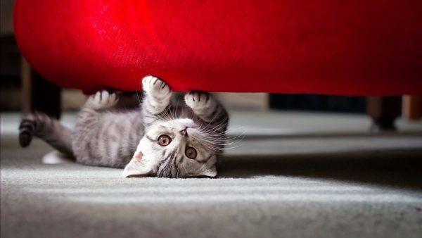 Как отучить кошку царапать мебель в квартире