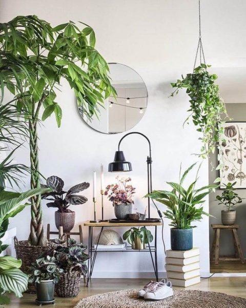 Какие растения можео безопасно использовать в интерьере гостиной