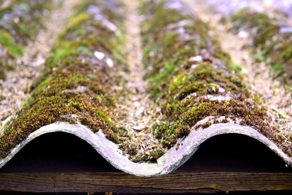 На шифере может прорастать мох