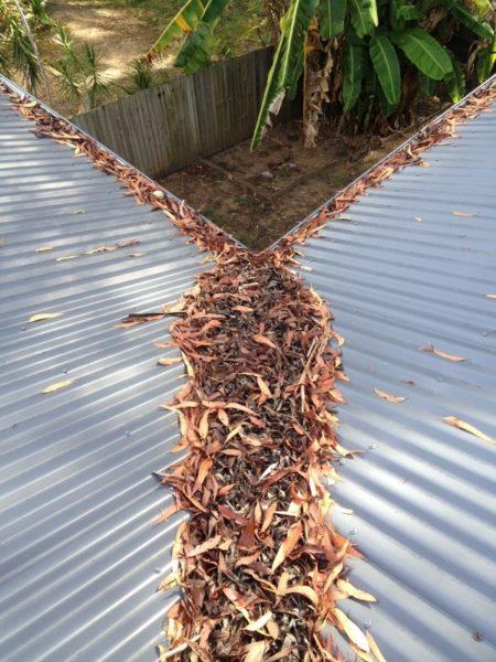Не допускайте слеживания листьев. Уплотнившийся слой будет задерживать влагу, превратившись в постоянный источник сырости