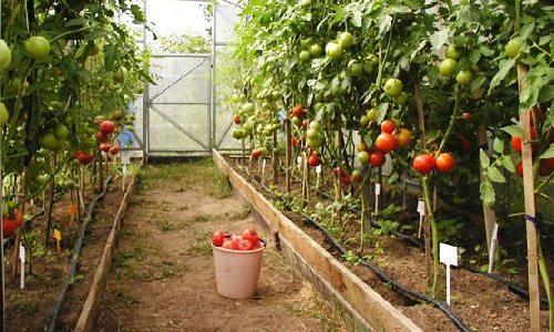 Оптимальная конструкция – гарантия хорошего урожая