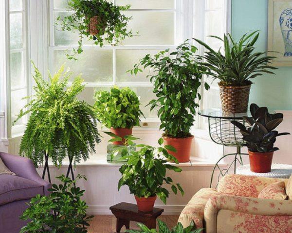 Что такое фитодизайн и как правильно его использовать в интерьере своей квартиры