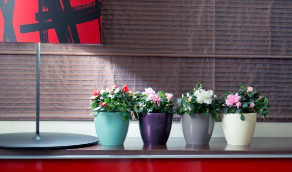 Как выбрать горшки для комнатных растений